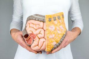 Doctor sosteniendo modelo de intestinos